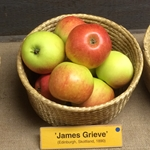 Malus domestica 'James Grieve' E